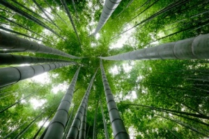 The Chinese Bamboo Tree ~ A lesson of love and patience.