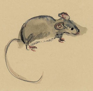 mouse-1